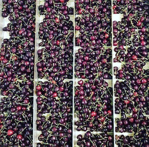 black cherry Oromiyeh