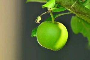 apples benefits - Is apple good for our health ?