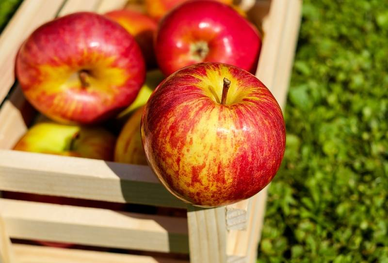 Different kinds of apple in iran - all types pf persian apple