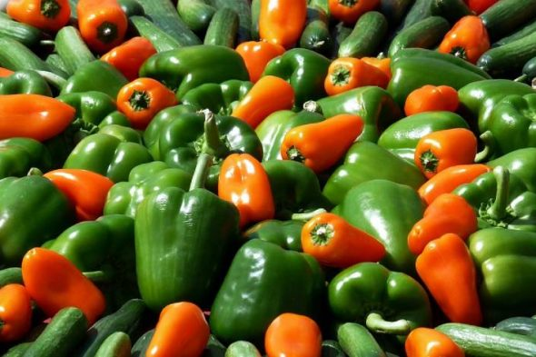 Why the green pepper turns red ? is it hot ? + green pepper benefits