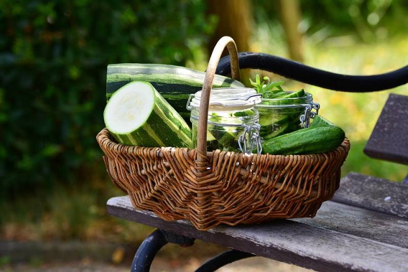 zucchini benefits and its difference with squash + nutrition facts